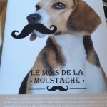 La Doggy Box de novembre, le mois de la moustache