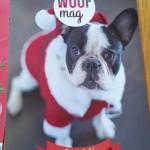 La Woufbox, parfaite box de Noël pour nos toutous