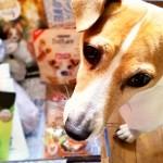 Les chiens aussi ont le droit de se pomponner : merci Woufbox !