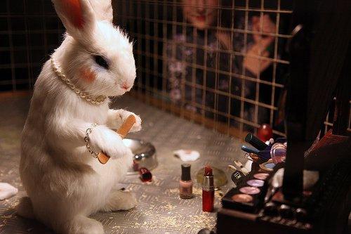 tests sur les animaux