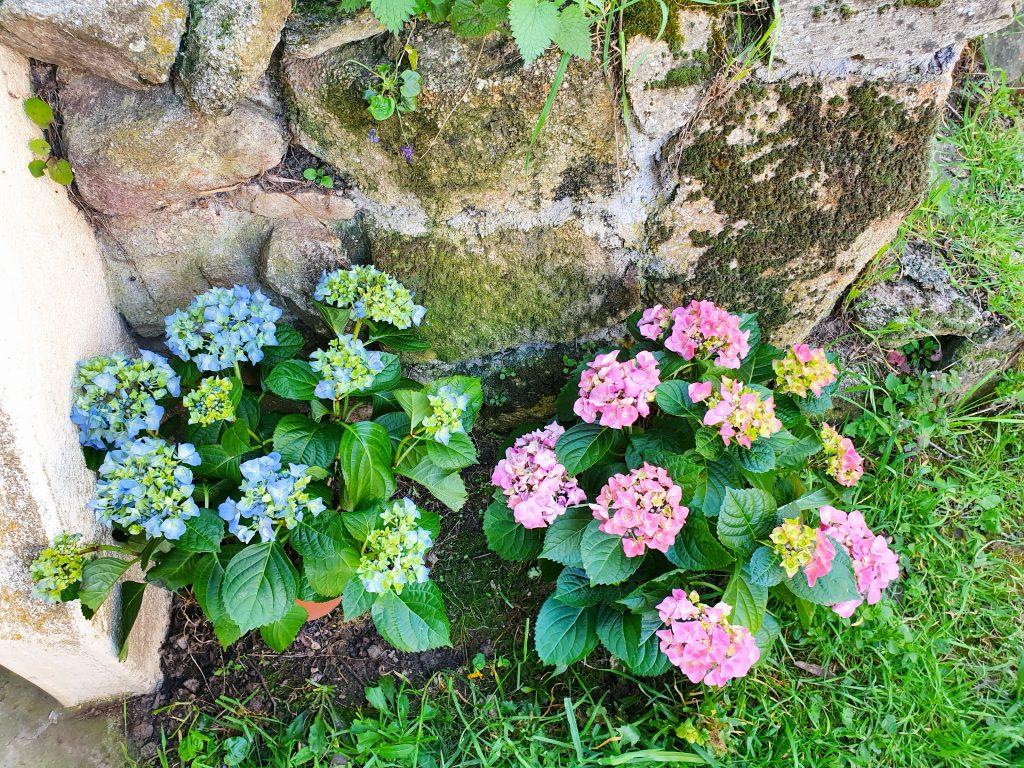 Les outils indispensables pour débuter en jardinage