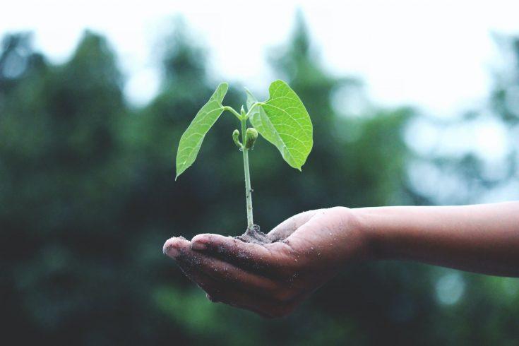 gestes écologiques faciles à adopter au quotidien