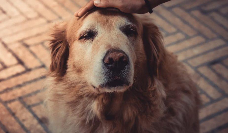 conseils avant d'adopter un chien
